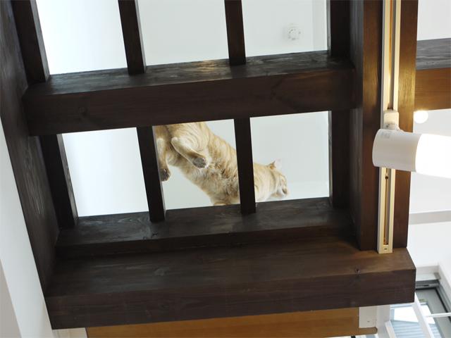 たくさんのアイデアを頂いたF様邸。梁を利用したキャットウォークの他にも、猫ちゃんの肉球を下からみたいとのご希望で完成した強化ガラスの廊下など、こだわりが満載。